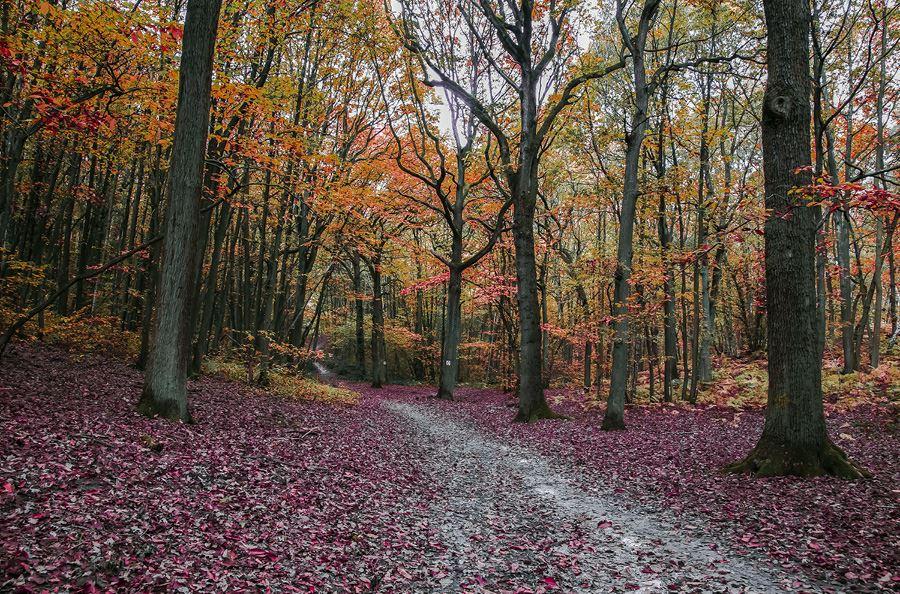 Image de la catégorie Matériel forestier
